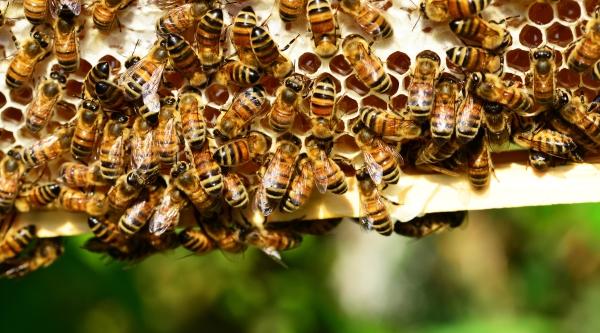 für Bienen