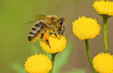Tipp des Bienengesundheitsdienstes