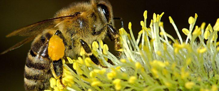 Linksammlung zu Themen der Bienengesundheit und der imkerlichen Praxis
