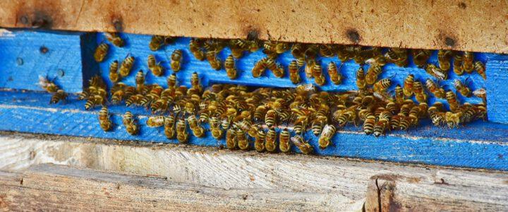 Infobrief – Lehrbienenstand